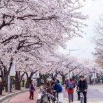 Du học Hàn Quốc - đến với xứ sở Kim chi xinh đẹp