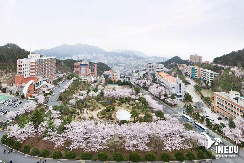 Du học Hàn Quốc trường đại học Dongeui - trường tư thục hàng đầu tại Busan