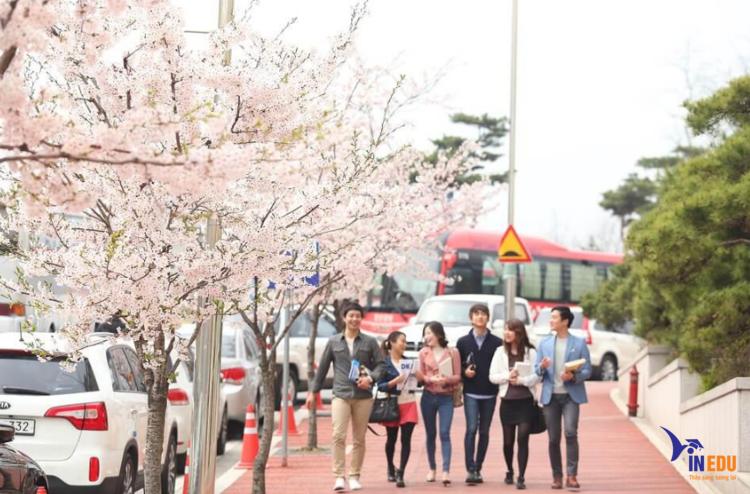 Du học tại Hàn được nhiều người quan tâm