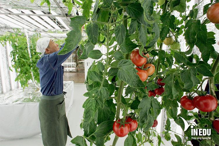 Ngành nông nghiệp – thực phẩm được đào tạo tại nhiều trường học danh tiếng