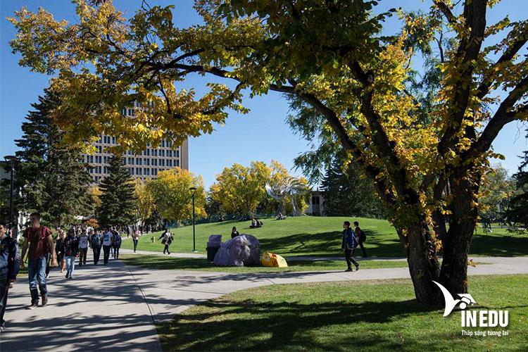 Yêu cầu đầu vào và học phí dành cho du học sinh quốc tế tại Đại học Calgary Canada
